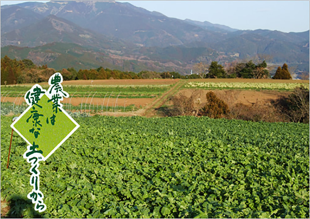 野菜生産 藤瀬農園 [佐賀県多久市]
